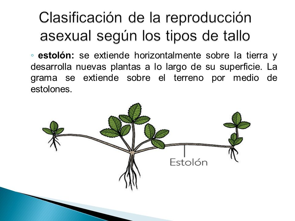 Videos sobre la reproduccion asexual de las plantas